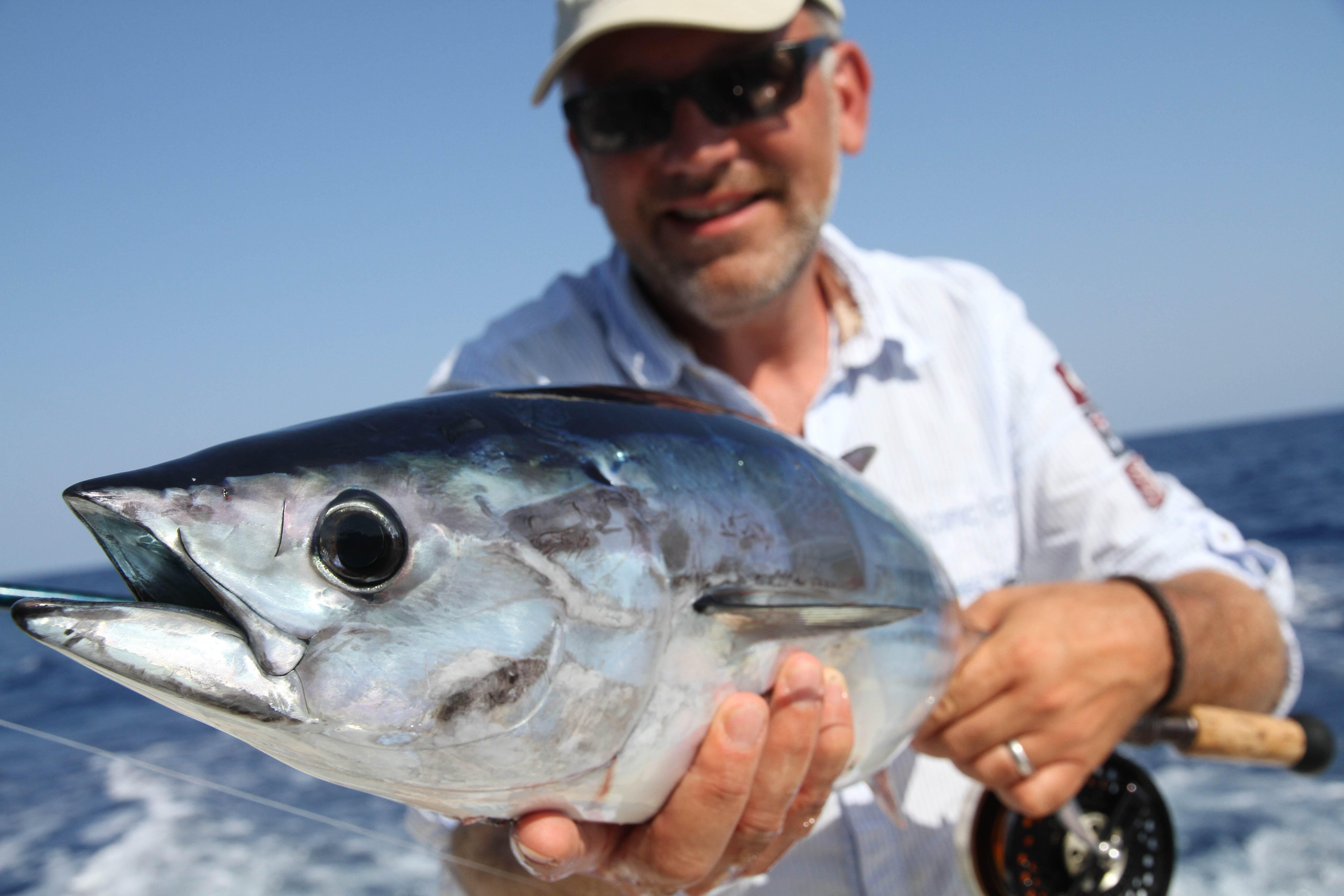 Beim Fliegenfischen im Salzwasser werden die Schnurklasse 10 und höher eingesetzt. Diesen Skipjack fing Michael Werner vor Mallorca mit einem Streamer. Foto: M. Werner