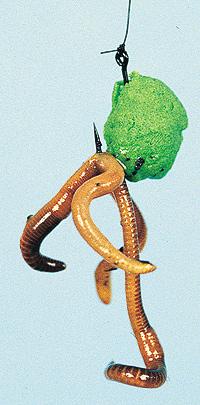 Tödlicher Mix: auftreibender Forellenteig in Nugget-Form mit einem Wurm gekoppelt.