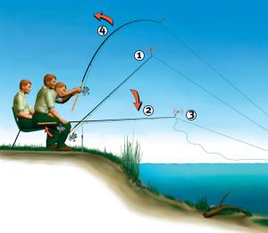 Wenn der Raubaal zweimal klingelt... Bei zaghaften Bissen (1) muss man die Rute senken, die Schnur lockern (2), und erst beim Abzug (3) anschlagen (4).