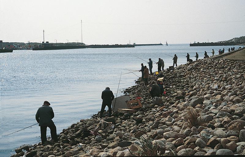 Wenn im Frühjahr die Heringe zum Laichen in Ufernähe kommen, gibt es kein Halten mehr. Sowohl gestandene Angler als auch Gelegenheitsangler stellen den silbernen Fischen nach. Foto: BLINKER