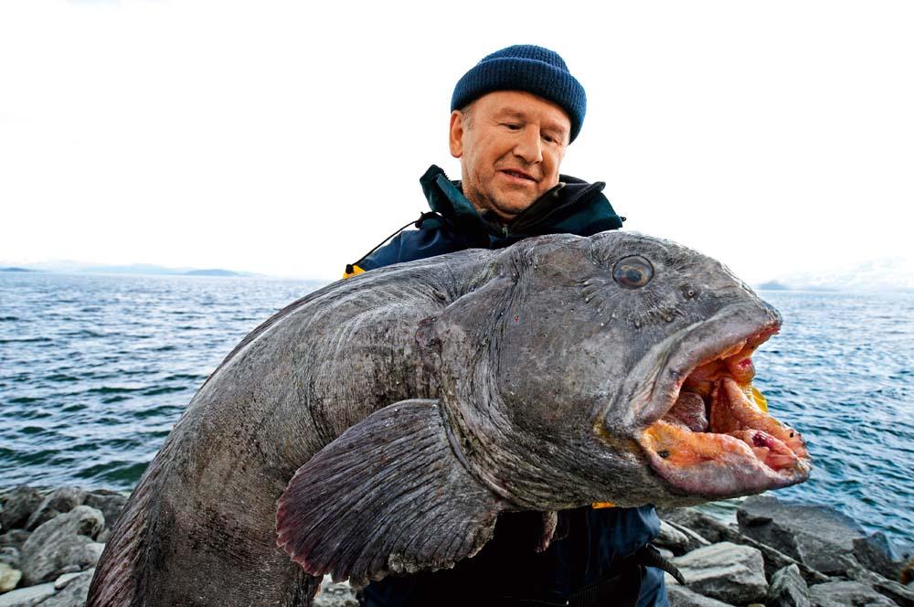 Mega-Beißer aus dem Skjerstadfjord, bei einem Heilbuttseminar des Autors gefangen: 14,6 Kilo!