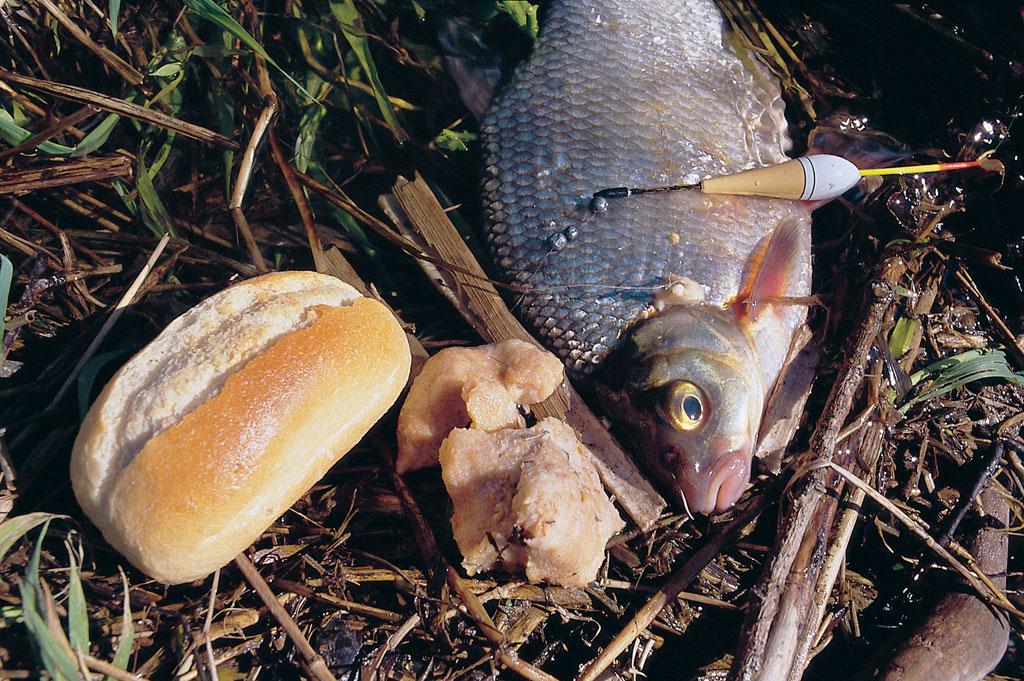 Beim Angeln mit Teig sind Brassen beliebte Abnehmer. Foto: Blinker