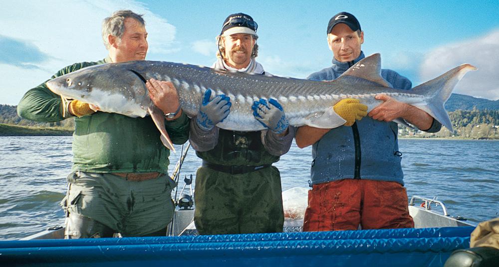 So lange leben fische blinker for Fische in teichen