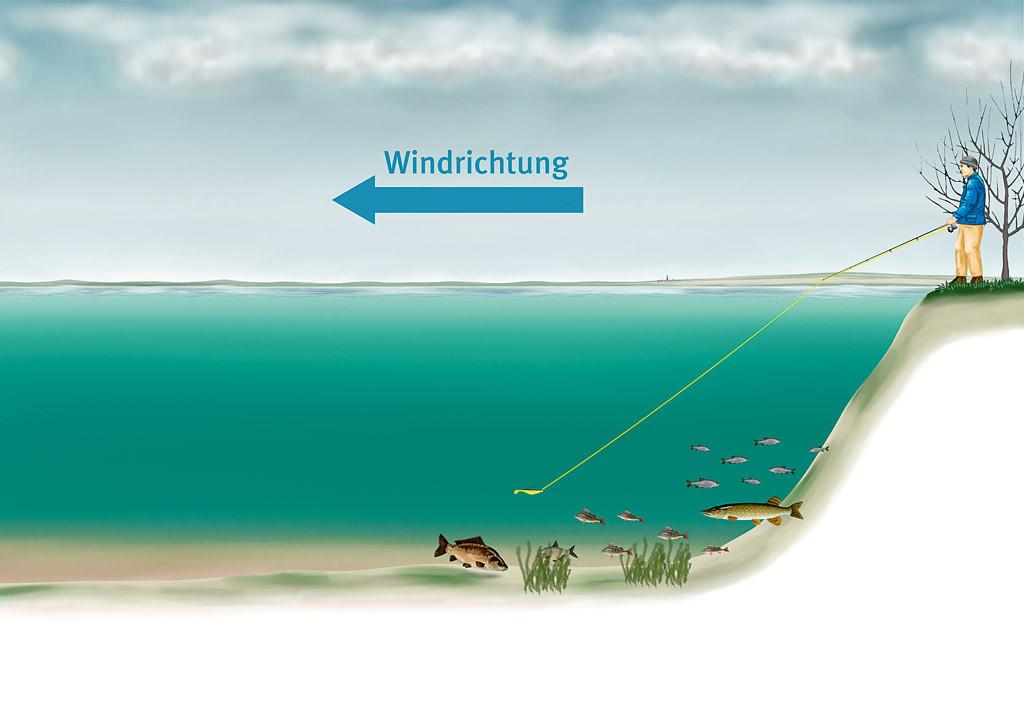 Der Wind drückt das kalte Wasser weg und wärmeres schiebt sich nach oben. An solchen Spots halten sich gerne Weißfische und damit auch die Hechte im Winter auf.