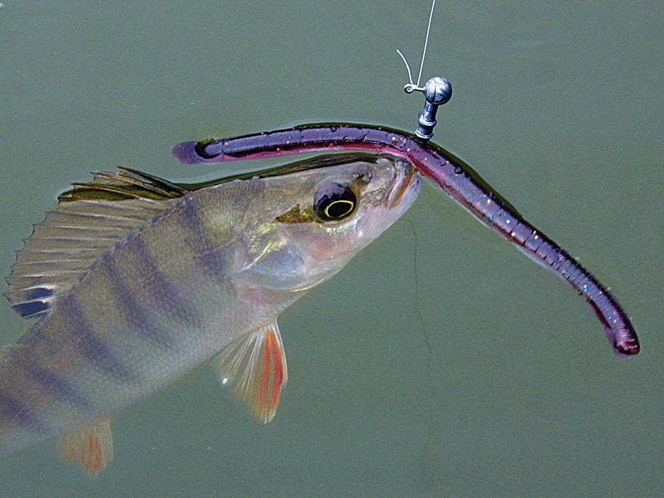 Den Wacky-Wurm lässt man durch Bewegung der Rutenspitze im Mittelwasser herumwackeln.