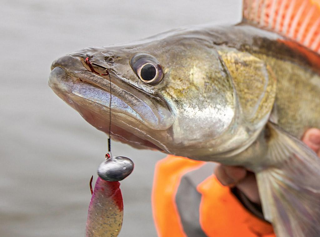 Wenn die Fische mal wieder sehr vorsichtig beißen, kann ein Stinger die Ausbeute deutlich erhöhen. Foto: BLINKER
