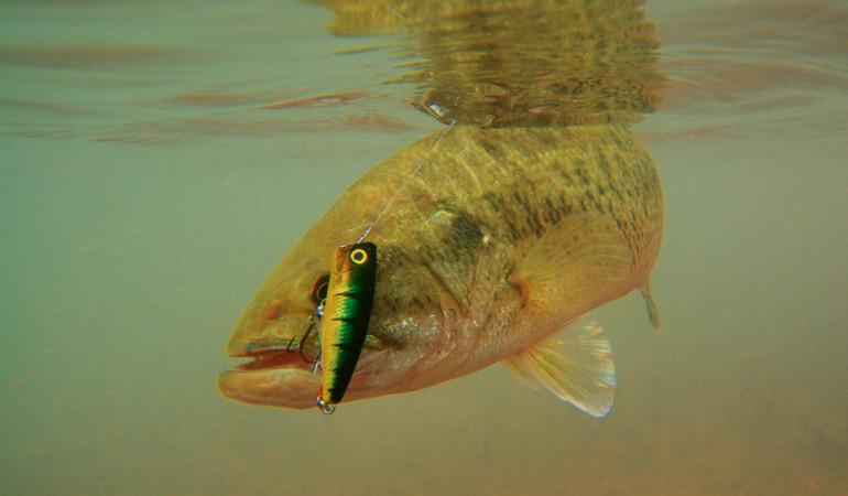 Es gibt zahlreiche Oberflächenköder auf den Markt, die nicht nur hierzulande erfolgreich gefischt werden. Wir stellen Euch hier die unterschieldlichen Ködertypen genauer vor. Foto: BLINKER