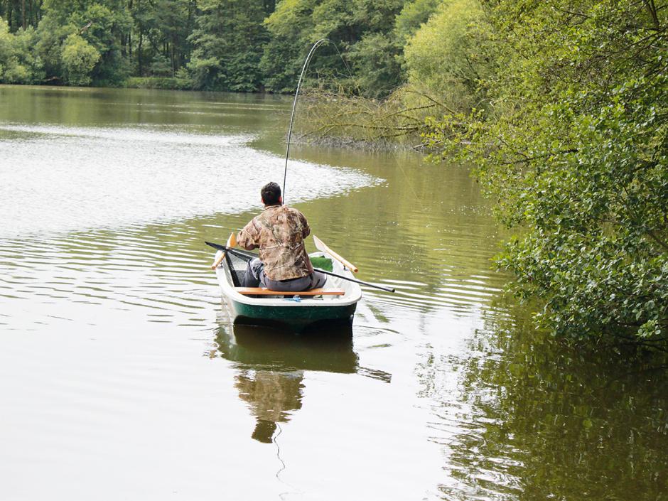 Vom Boot aus lassen sich Karpfen auch an überhängenden Bäumen ausdrillen