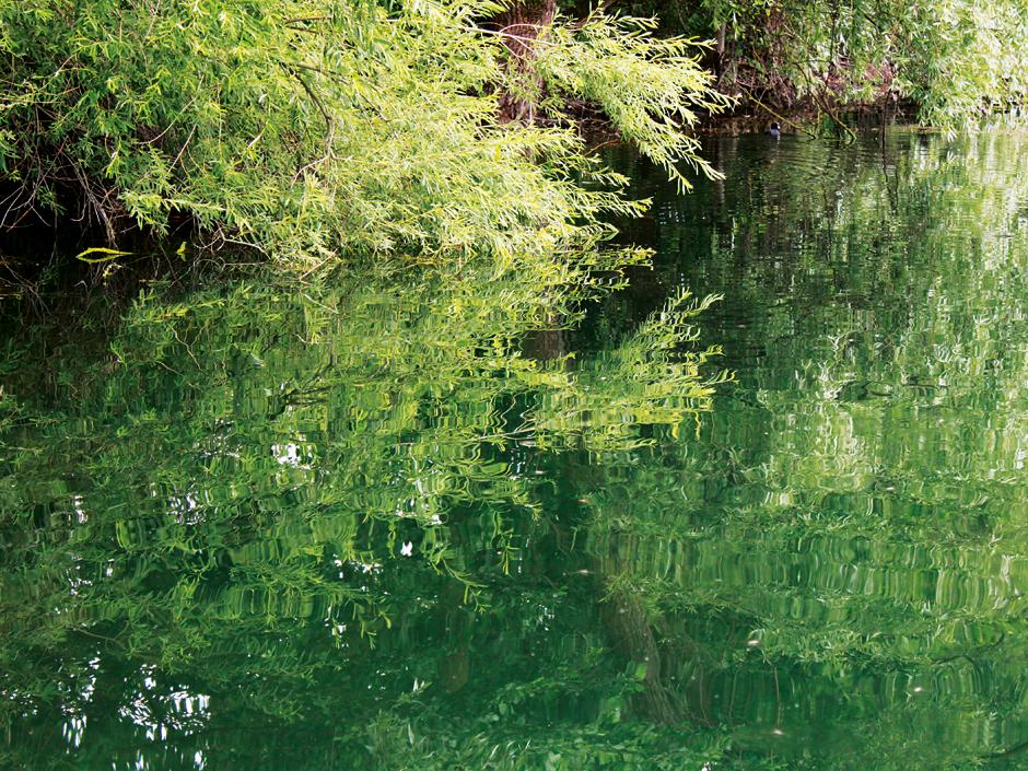 Ins Wasser gestürzte Bäume sind Karpfen-Hotspots. Achtung: Die Fische flüchten im Drill gerne ins Geäst.