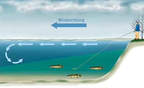 Im Winter stehen die Hechte vorzugsweise auf der windabgewandten Seite des Sees, im Tiefen. Grafik: BLINKER