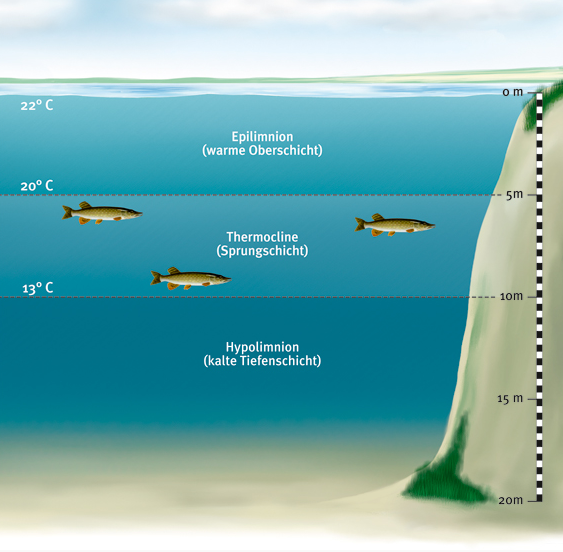 Hechte bevorzugen Wassertemperaturen zwischen 13 und 18 Grad Celsius. Grafik: BLINK