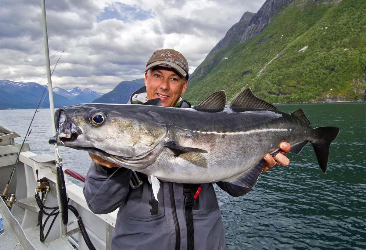 In Westnorwegen kommen durchaus auch große Fische vor. Besonders beliebt ist das Angeln auf Leng und Seelachs. Foto: BLINKER/M. Wendt