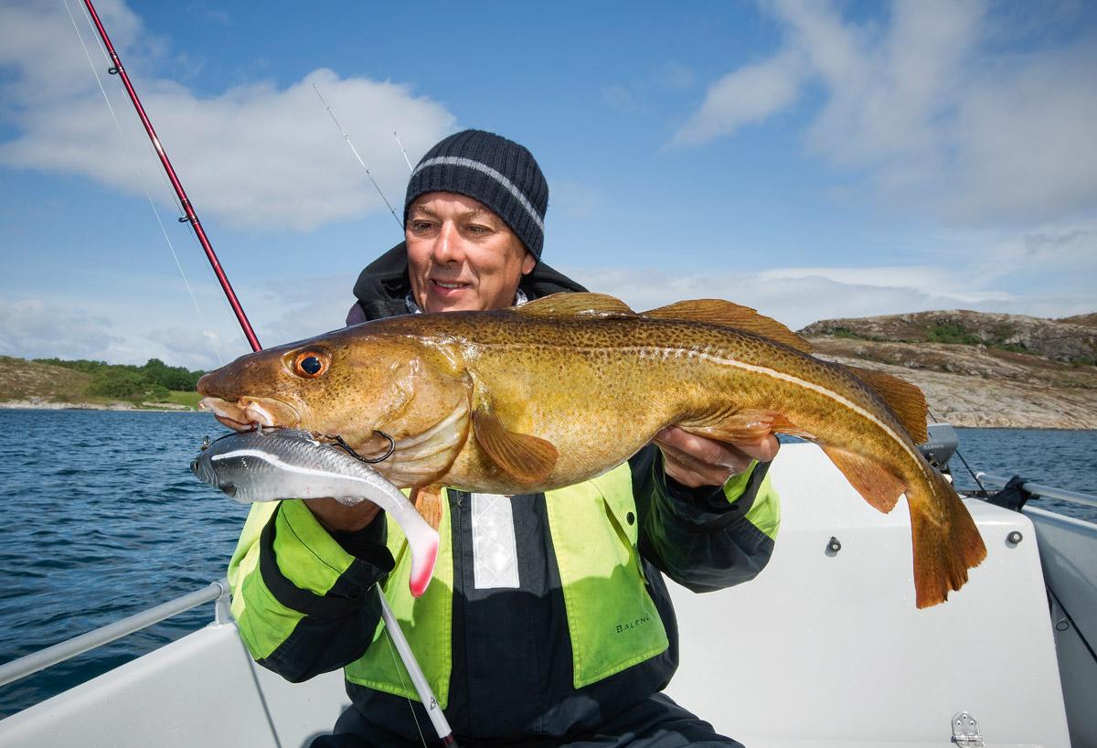 Keine Angst vor großen Ködern: Dorsche gehören im Süden Norwegens zu den häufigen Hakengästen. Foto: BLINKER/M. Wendt