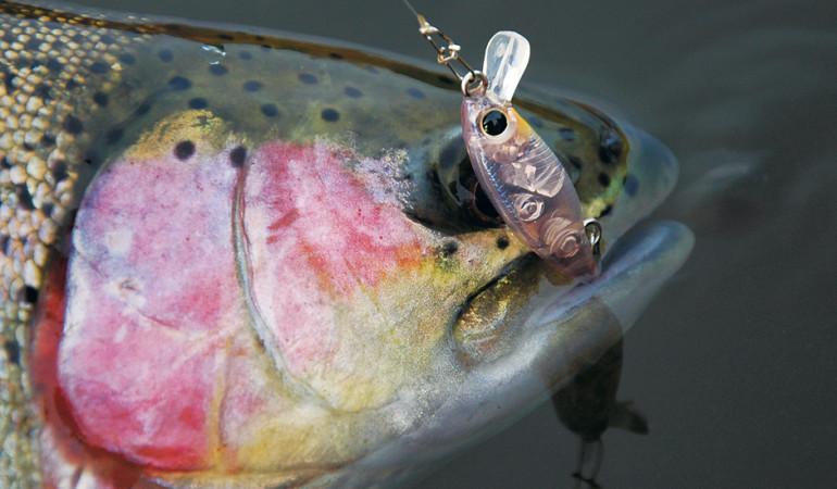 Auge in Auge mit dem Mini-Wobbler. Die Kleinfisch-Imitationen sind ein unwiderstehlicher Köder für Forellen.
