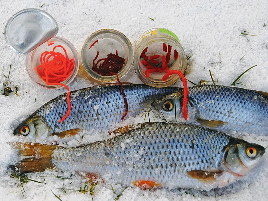 Gummimaden (rechts) und Gummipinkies (links) können die Fängigkeit eim Rotaugenangeln im Winter von echten Maden erhöhen. Künstliche Zuckmücken (mitte) fangen aber auch solo angeboten sehr gut.