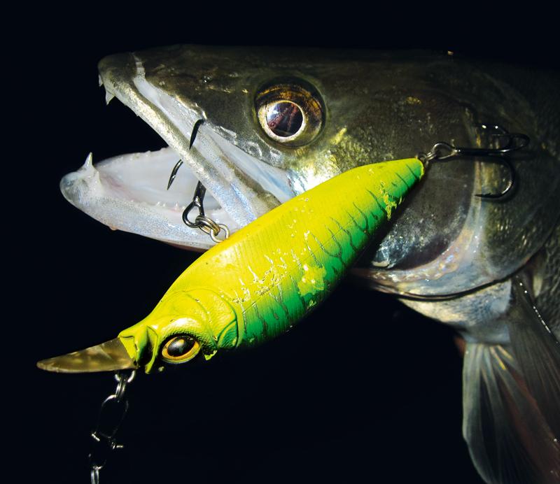 Im Herbst stehen die Zander noch nicht auf Maximaltiefe, so dass man auch als Uferangler oft drillen kann.