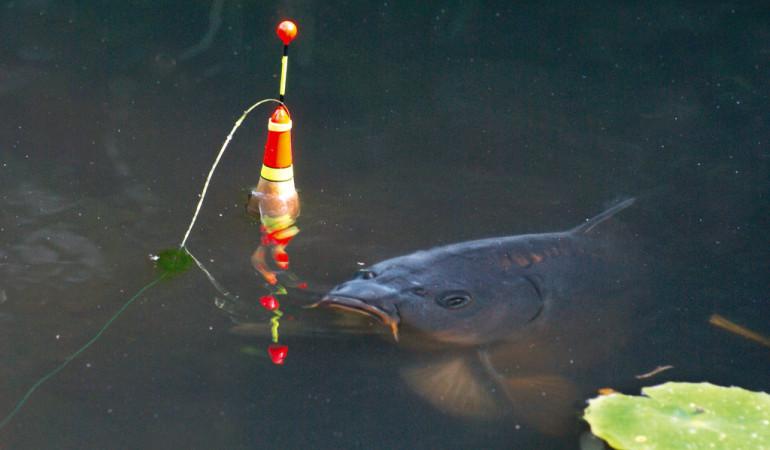 Nicht nur Karpfen, sondern auch andere Fried- und Raubfische lassen sich hervorragend mit der Pose fangen.
