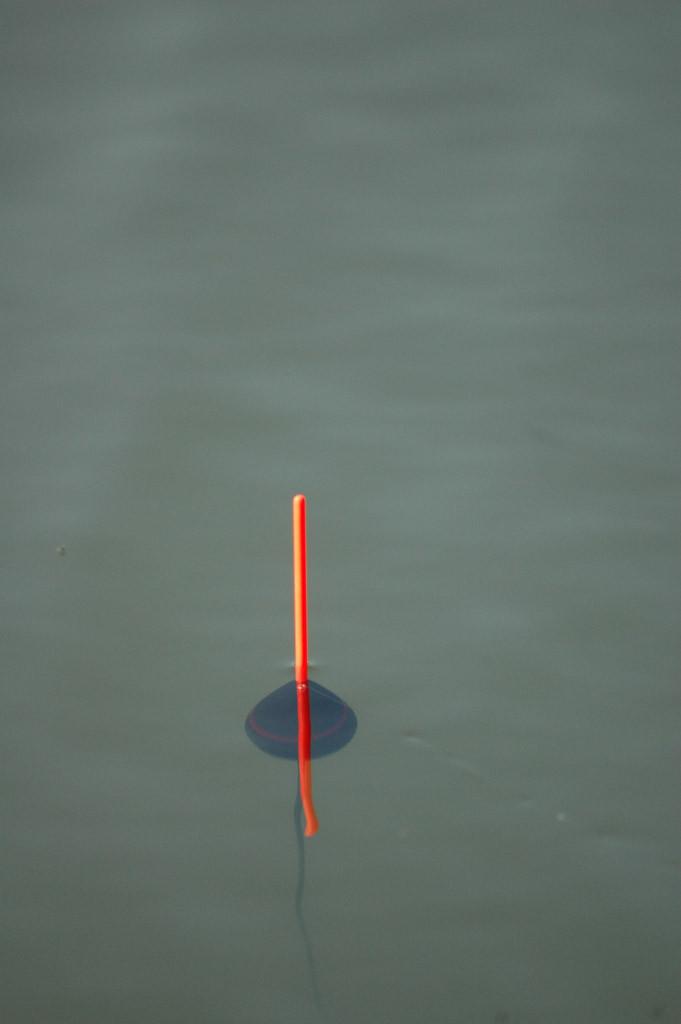 Damit eine eiförmige Strömungspose jeden noch zu feinen Zupfer anzeigt, sollte man sie so bebleien, dass nur die Antenne aus dem Wasser schaut. Dann steht die Pose stabil im Wasser und reagiert dennoch sehr sensibel. Bei einem Biss wird die Pose seitlich weggezogen oder angehoben. Dann muss der Anhieb kommen.