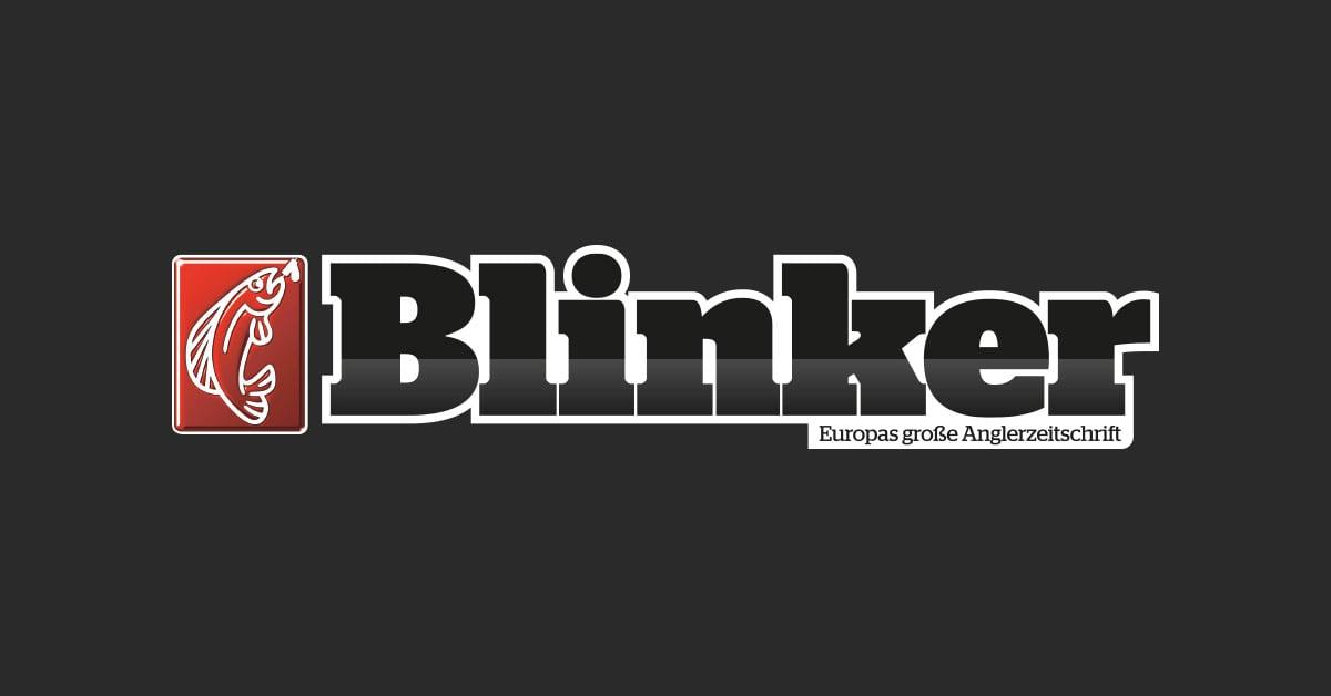 Angelsee Aktuell Blinker