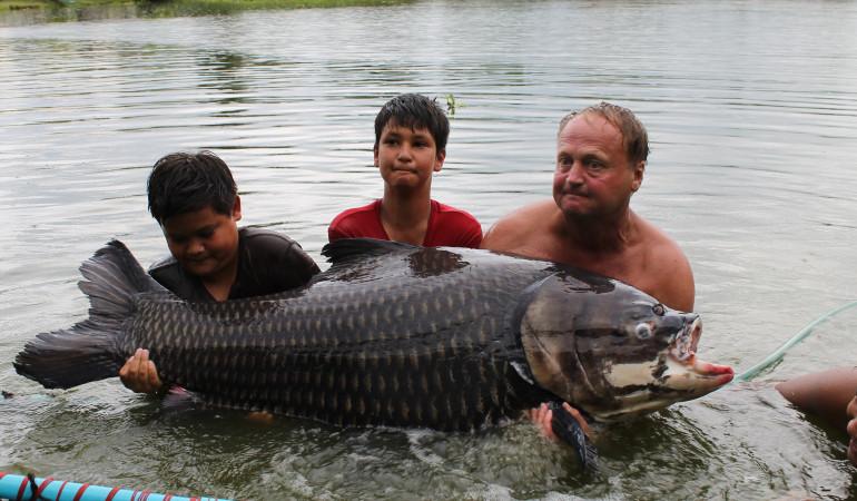 Harald Klein (re.) stemmt seinen riesigen Siamkarpfen. Er bekommt tatkräftige Hilfe von seinem Sohn Daniel (li.) und dessen Freund Christian. Foto: H. Klein