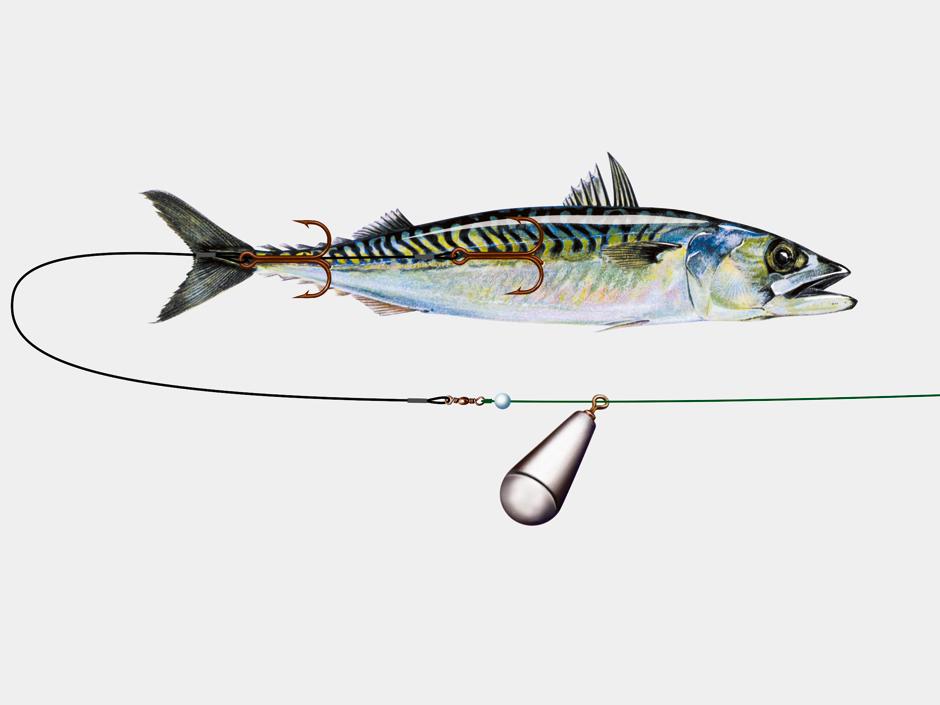 Meeresfische wie Makrelen werden an einer Grundmontage auf angeboten. Grafik: BLINKER