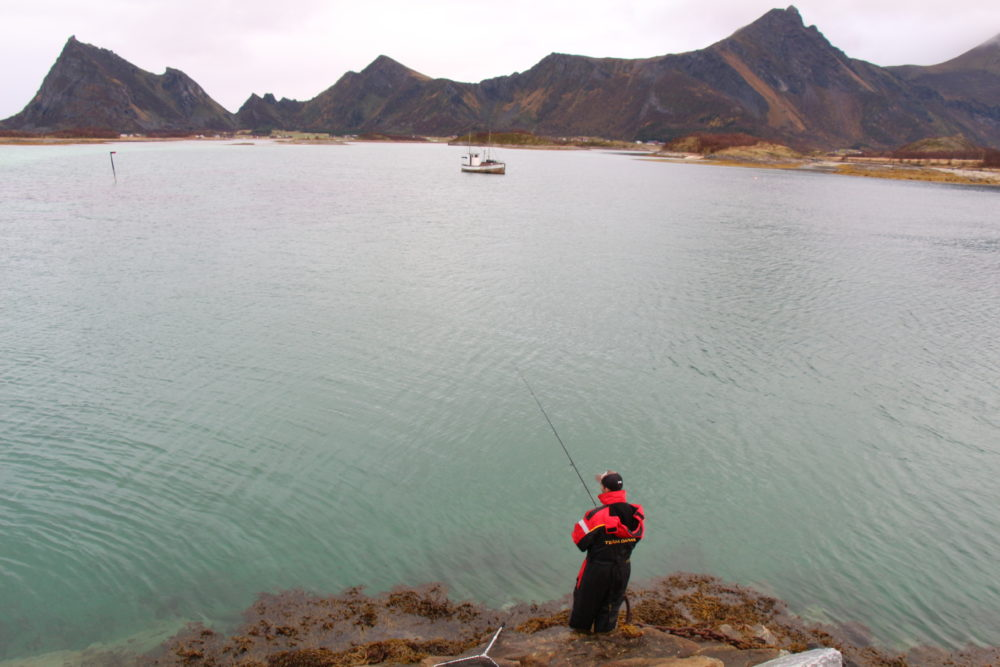 Frühmorgens ging es vor der Bootsausfahrt vom Ufer aus auf Dorsch. Hier brachte fast jeder Wurf einen Fisch und der Tag war gerettet.