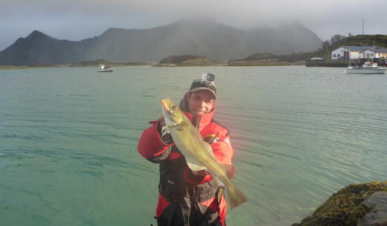 Solche Dorsche sind beim Uferangeln in Norwegen keine Seltenheit. Wenn man richtige Spots mit Kanten, Verengungen etc. sucht, sind problemlos zweistellige Fangzahlen möglich.