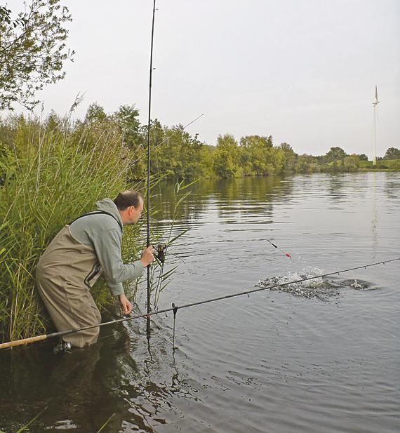 Gut zu erkennen: die schlanke Laufpose, die der wilde Zander unter Wasser zog und letztendlich am Haken hängen blieb. Foto: Blinker
