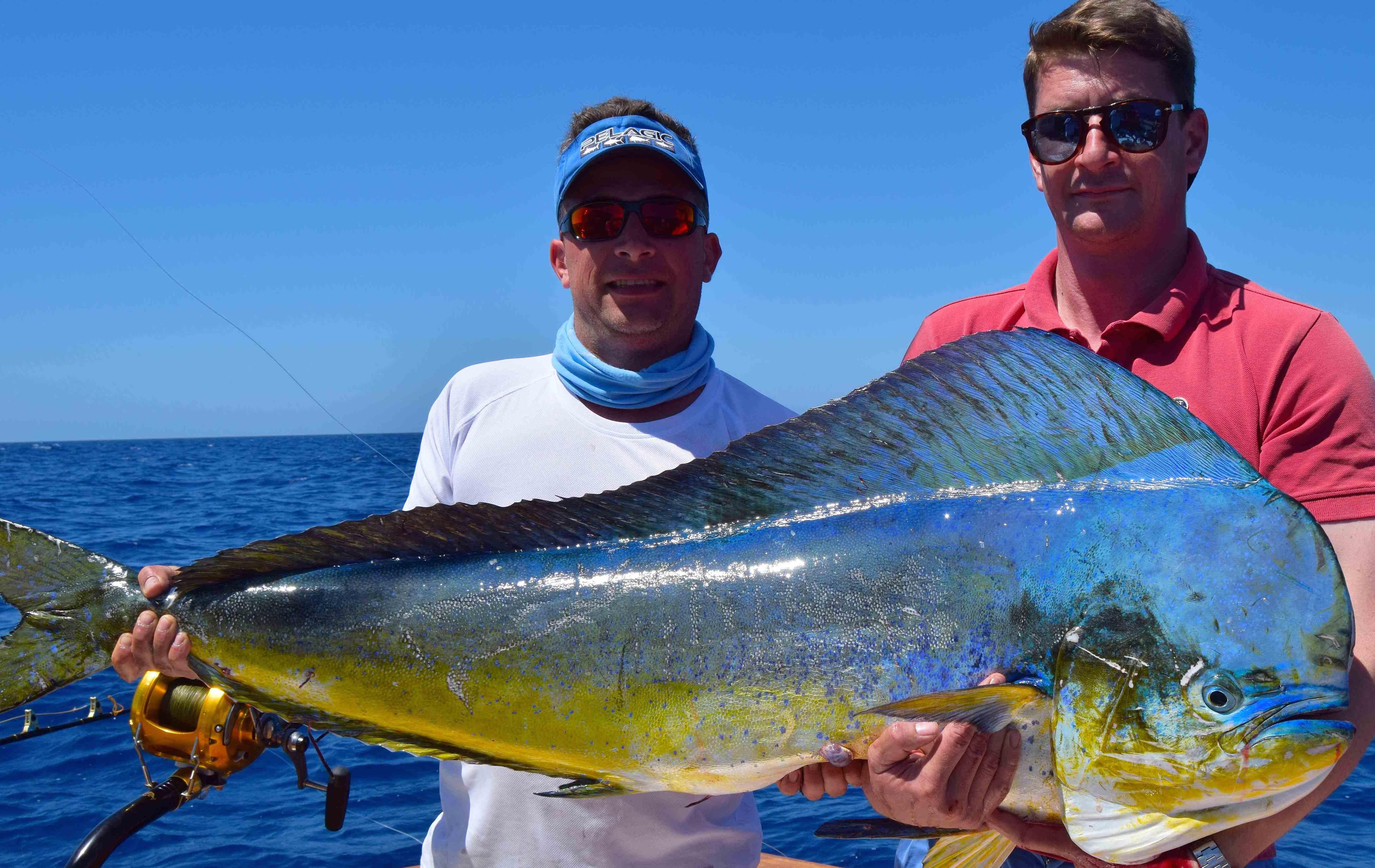 Diese große Goldmakrle wurde gerade im Mittelmeer gefangen! Skipper Michael Standor (links) freut sich mit Fänge Hans Ostmann über den Ausnahmefisch, der im Canal Ibiza Mallorca gefangen wurde.