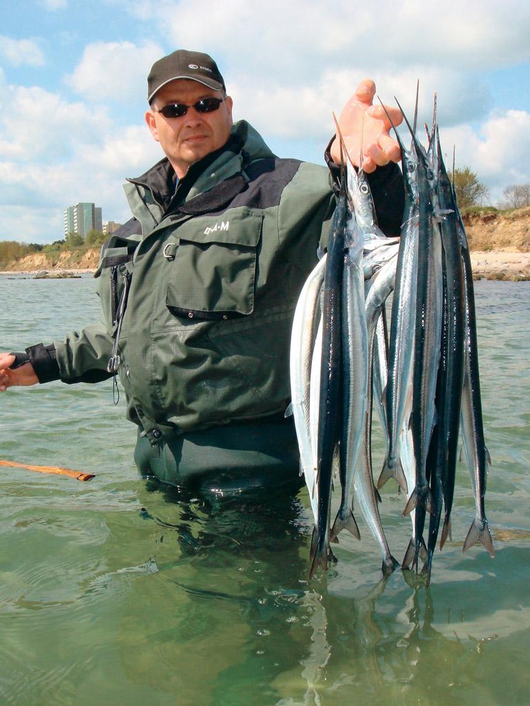 Wenn die Hornhecht-Zeit an den Küsten beginnt, können Angler fette Beute machen. Foto: BLINKER
