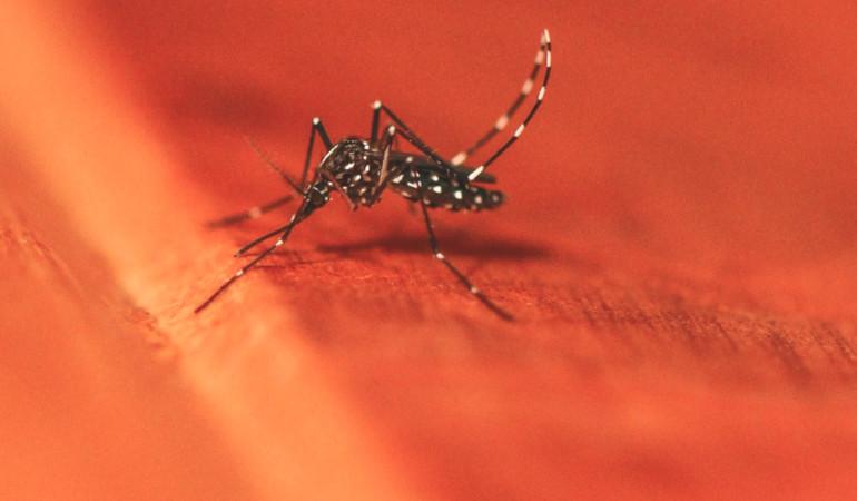 Mückenjagd Mücke Angler