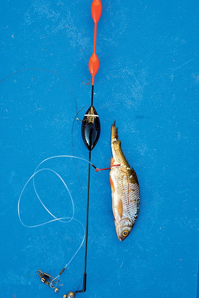 Wichtig beim Zanderangeln mit Pose: Auch diese sollte dem Fisch beim Biss keinen Widerstand bieten. Schlanke Modelle sind gefragt. Foto: Blinker