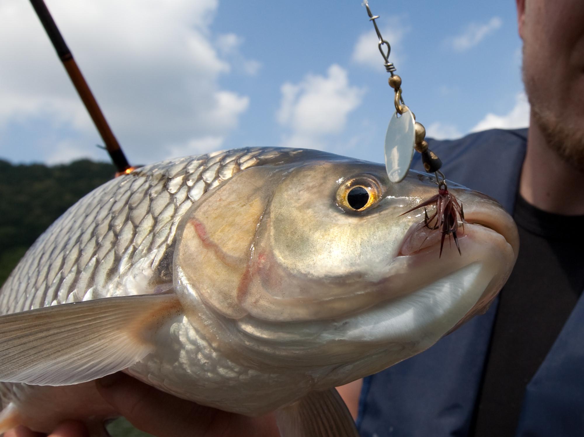 große Fälle mt zu Weißfisch mt