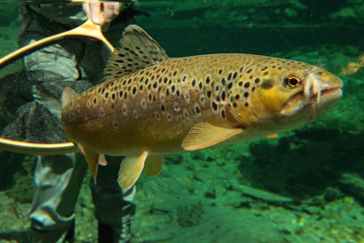 Fliegenfischen Geräte-Tipps Einsteiger Anfänger