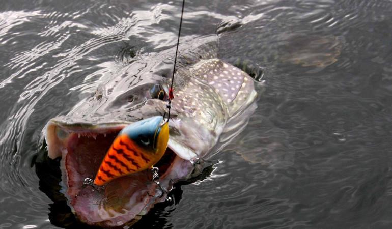 Jerkbaitangeln im Tiefen eröffnet uns Anglern Möglichkeiten, auch die tief stehende Fische an den Haken zu bringen. Foto: BLINKER