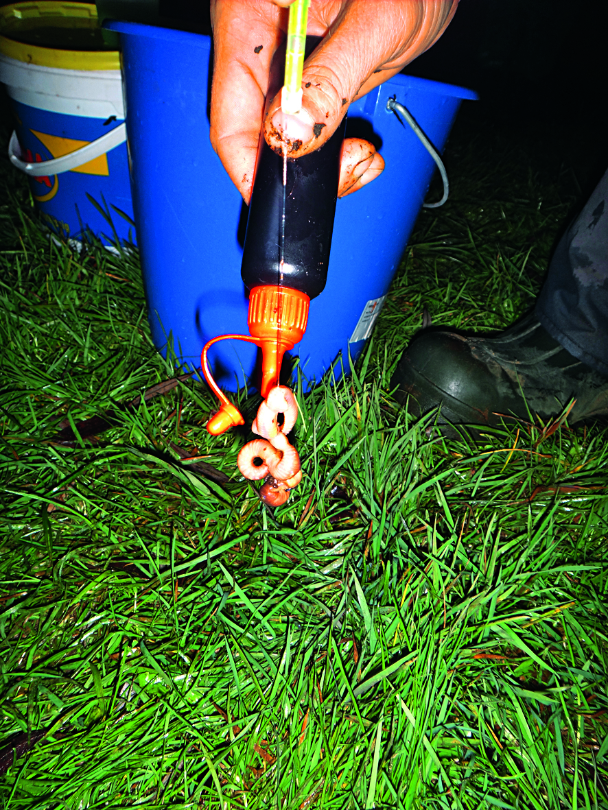 Lockstoffe sollten wohldosiert auf den Aalköder aufgetragen werden. Sonst kann die Lockwirkung umschlagen und die Schlängler mit ihren sensiblen Geruchssinn machen einen großen Bogen um den Köder. Foto: S. Kaufmann