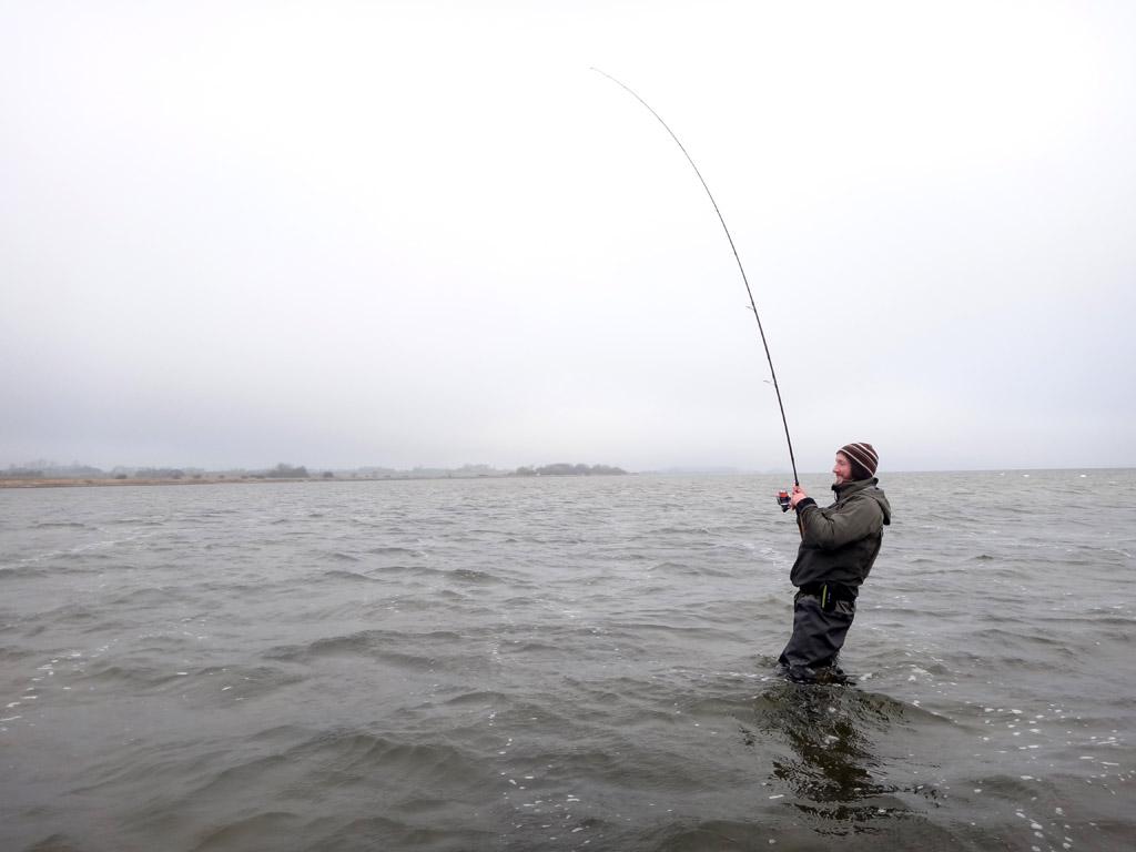 Wer zum Angeln an die Bodden fährt, sollte unbedingt darauf achten, dass er das richtige Tackle für Großfische im Gepäck hat. Sonst sind Verluste vorprogrammiert. Foto: BLINKER/F. Schlichting