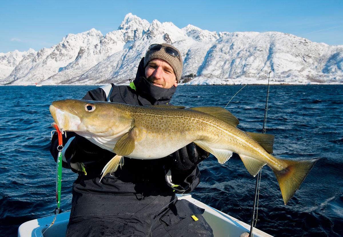 Fisch und Köder – beides etwas größer: In Norwegen und Island kommen schwerere Pilker zum Einsatz, um tiefer angeln zu können. Foto: W. Krause