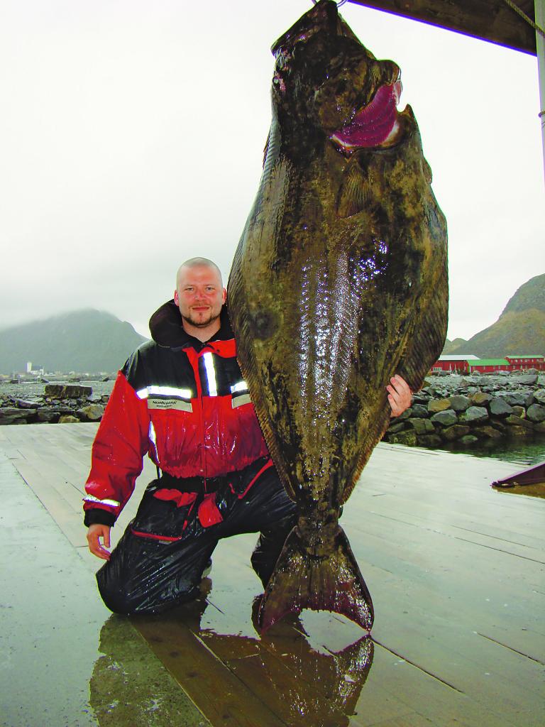 Dieser Heilbutt von 192 Pfund biss in fünf Metern Wassertiefe! Foto: Kristian Keskitalo
