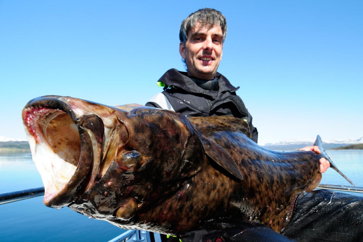 Heilbutt angeln: Solche platten Monster kann man vor Norwegen fangen. Dieser Koloss von 192 Pfund biss in nur fünf Metern Wassertiefe.