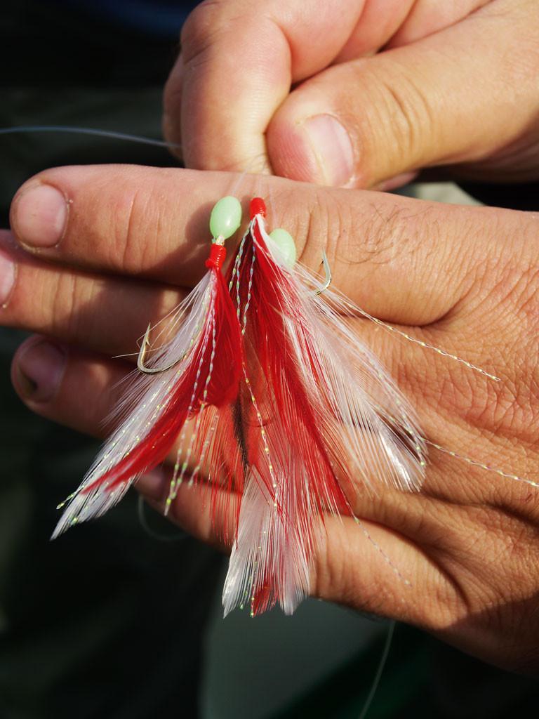 Diese Federn sind deutlich zu lang und sollten eingekürzt werden, sonst gibt's Fehlbisse. Foto: blinker