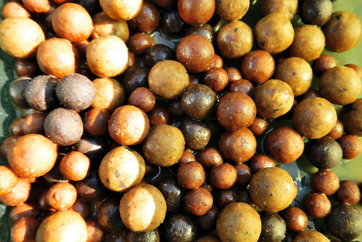 Kleine Boilies sind hervorragende Hakenköder für große Brassen. Foto: W.Kalweit