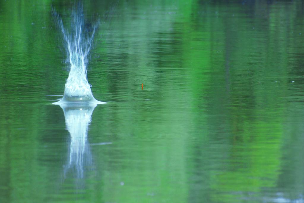 Brassen angeln mit der Matchrute, so wird richtig gefüttert