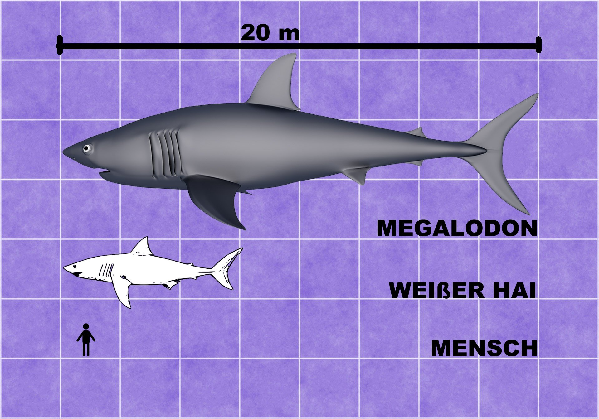 Megadolon Größenvergleich Mensch Weißer Hai