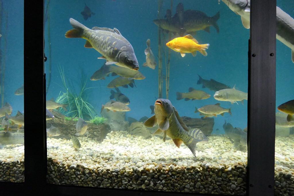 Ein Highlight war der große Aquatruck voller einheimischer Süßwasserfische