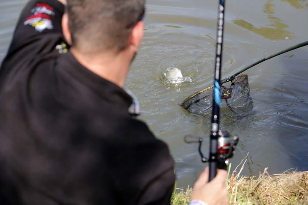 Auch Forellen zeigen sich vor den Zuschauern auf der Fishing Masters Show von ihrer besten Seite.