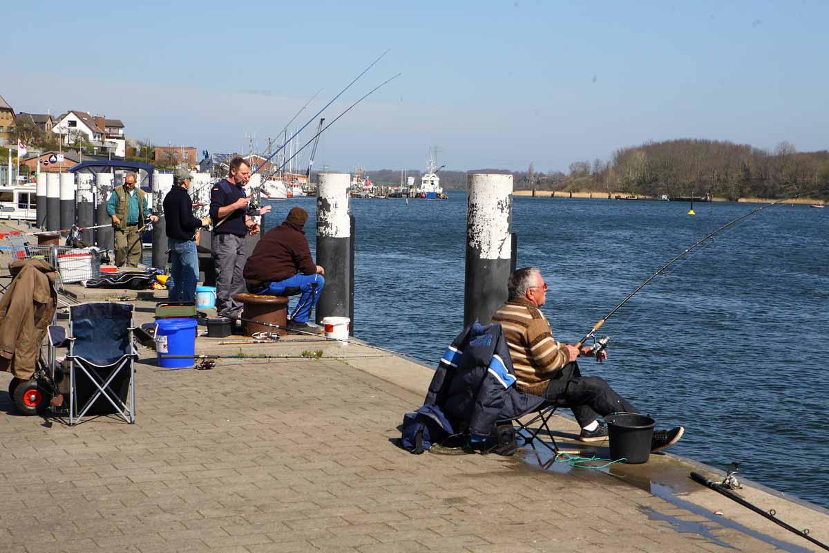 Die Heringe locken jedes Jahr tausende Angler an die deutsche Ostseeküste.