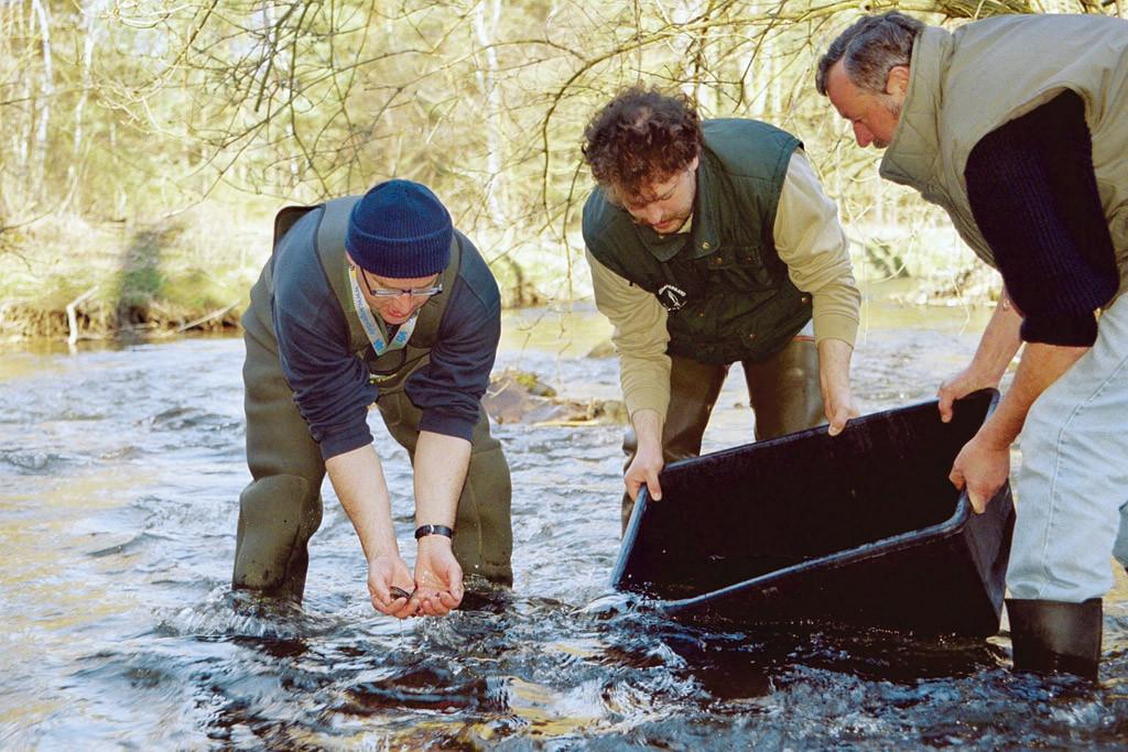 Jährlich werden Tausende Junglachse im Flusssystem der Elbe entlassen.