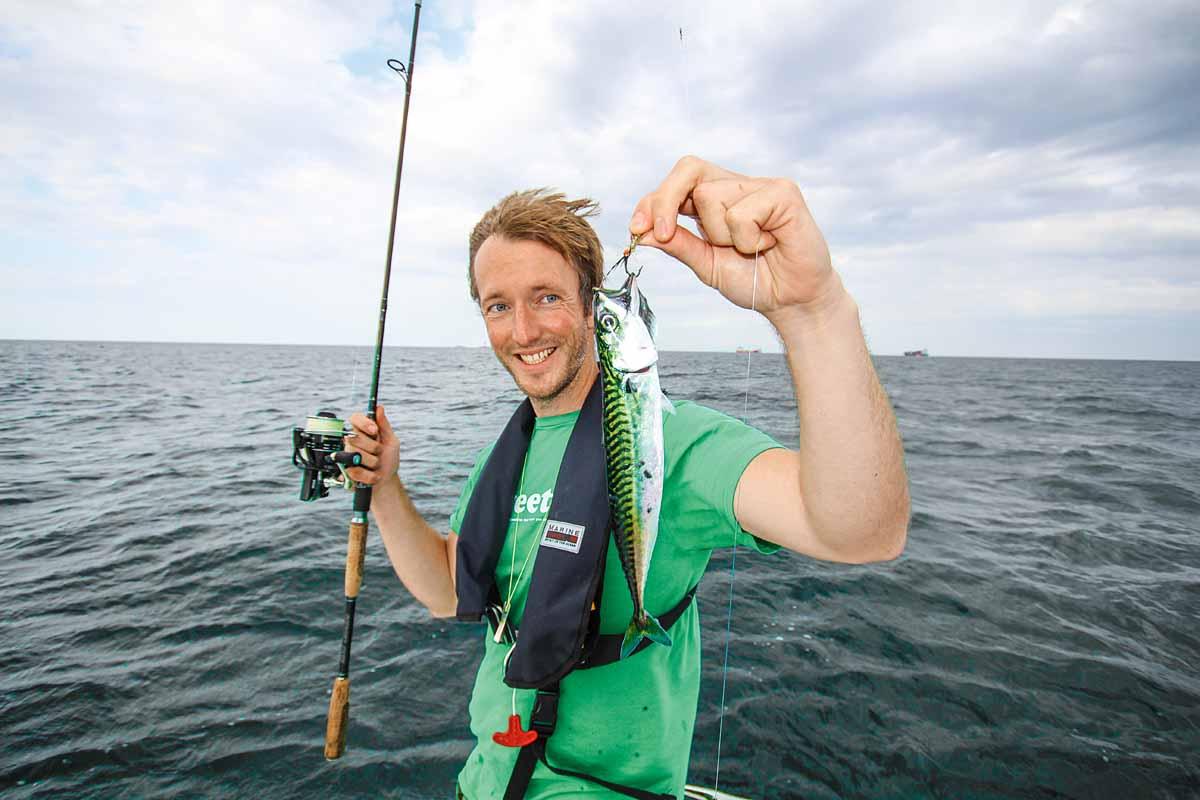 Leckerer Sommergast in der Ostsee: die Makrele.