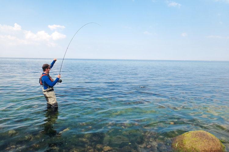 Beim Angeln in der Ostsee erlebt man immer wieder kapitale Überraschungen, wie ein brachialer Meeräschen-Biss.